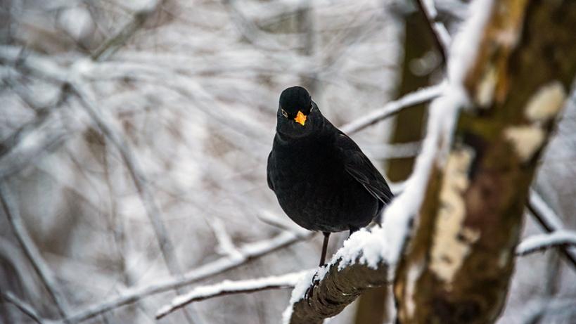 BirdPhoto2
