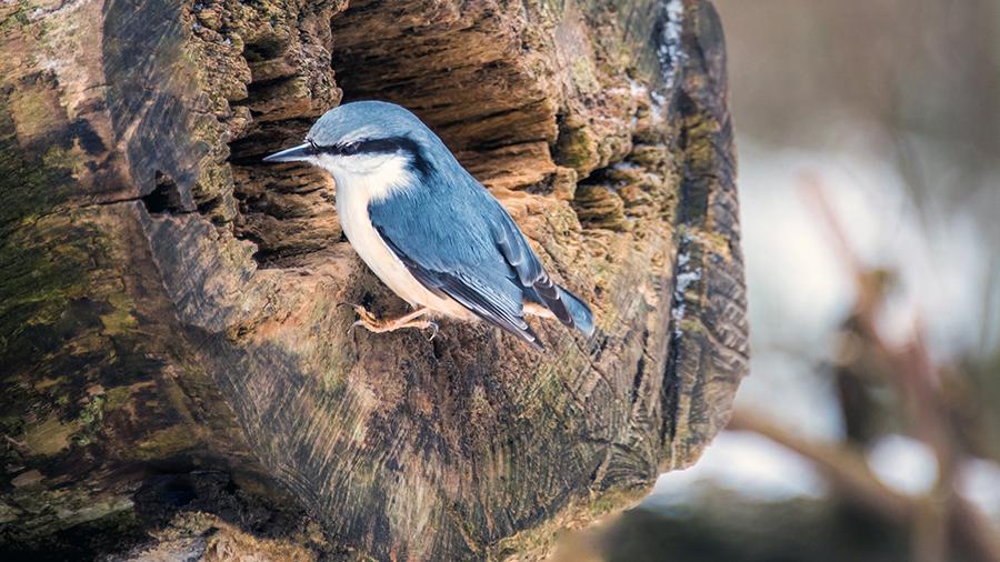 BirdPhoto3