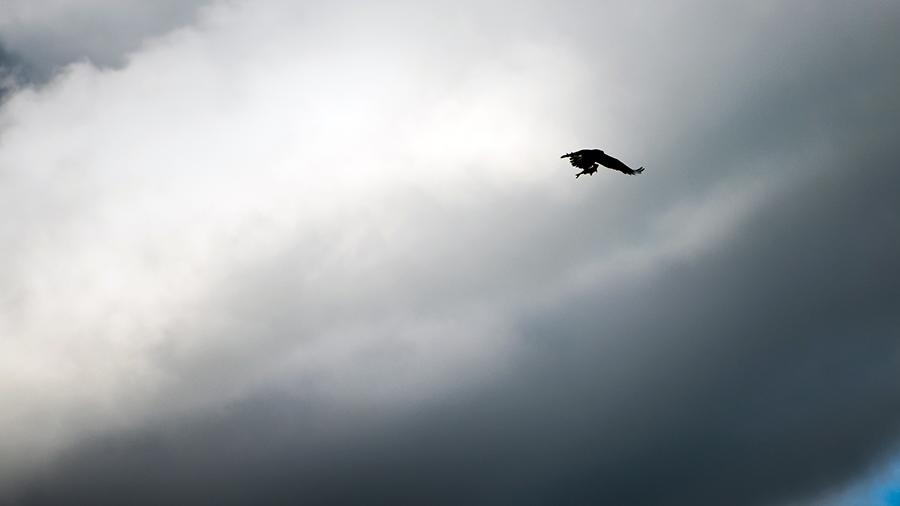 BirdPhoto4
