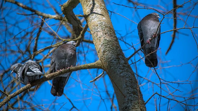BirdPhoto5